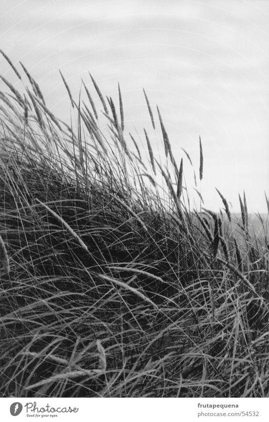 Dünen bei Sonnenuntergang Natur Himmel Meer Strand Ferien & Urlaub & Reisen Gras Bewegung Deutschland Wind frisch Europa Stranddüne Nordsee Wattenmeer bedecken