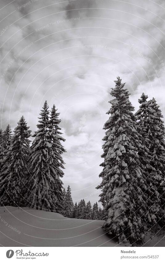 white trees Himmel weiß Baum Winter Wolken Wald Schnee Skigebiet Hoch-Ybrig