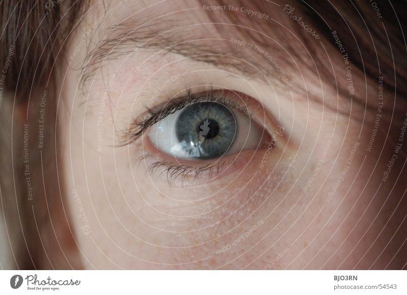 Auge sieht Frau Mensch Jugendliche blau schön Erwachsene Auge Farbe feminin Haare & Frisuren 18-30 Jahre brünett Tiefenschärfe vertikal Junge Frau Wimpern
