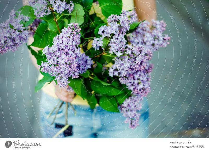 Flieder Natur blau weiß Pflanze Sommer Sonne Erholung Blume Blatt Wärme Frühling Blüte Garten rosa Park Schönes Wetter