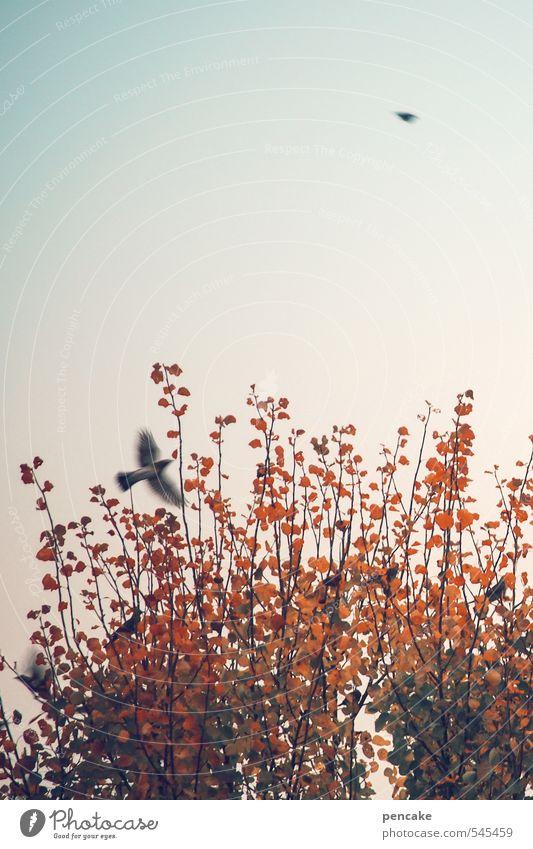 augenblick Natur Wolkenloser Himmel Herbst Baum Vogel 2 Tier Zeichen Bewegung fliegen Blick Farbe Freiheit rot Momentaufnahme Glück luftig frei Leichtigkeit