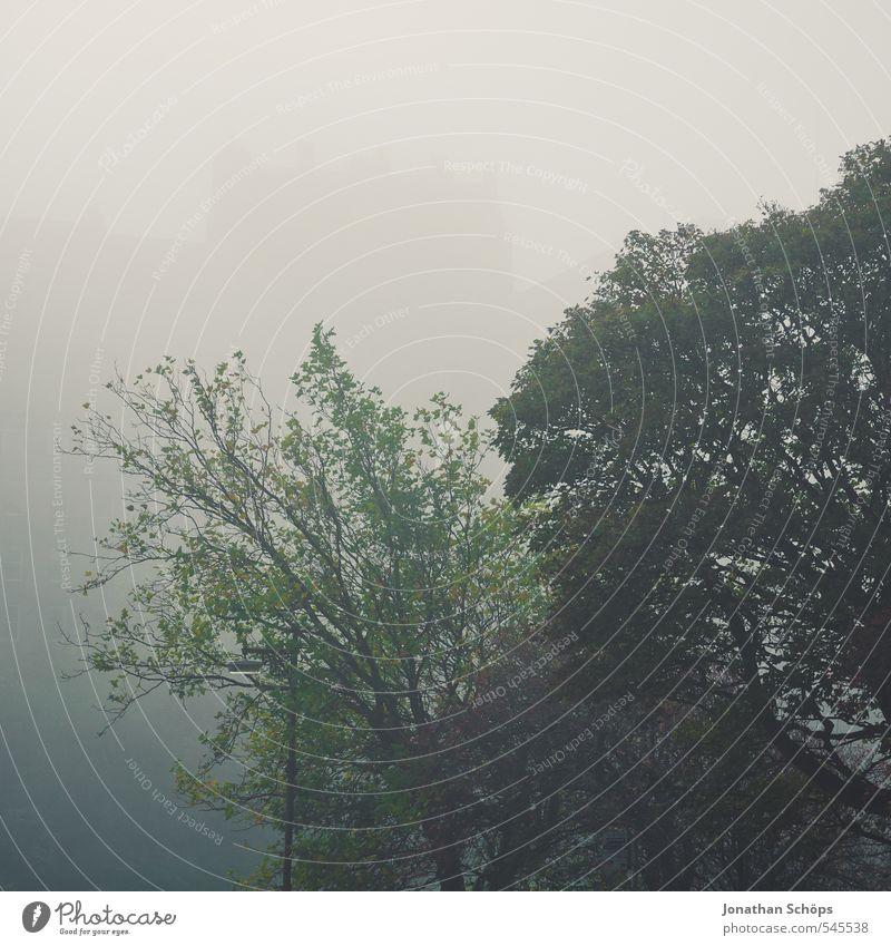 Edinburgh XIX Umwelt Natur schlechtes Wetter Nebel Baum bedrohlich gruselig grau grün Nebelschleier Nebelbank Nebelwald Nebelstimmung Nebelwand Dunst Schottland