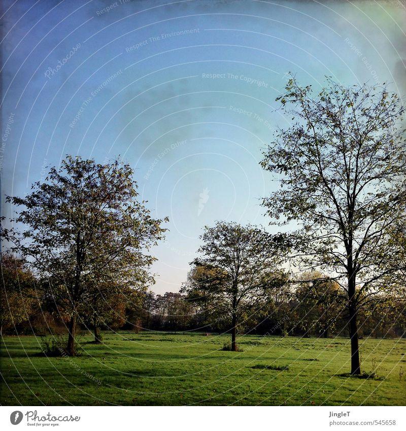 novemberbaum Himmel Natur blau Pflanze Sonne Baum Landschaft schwarz Umwelt Wiese Herbst braun Park gold Zufriedenheit authentisch