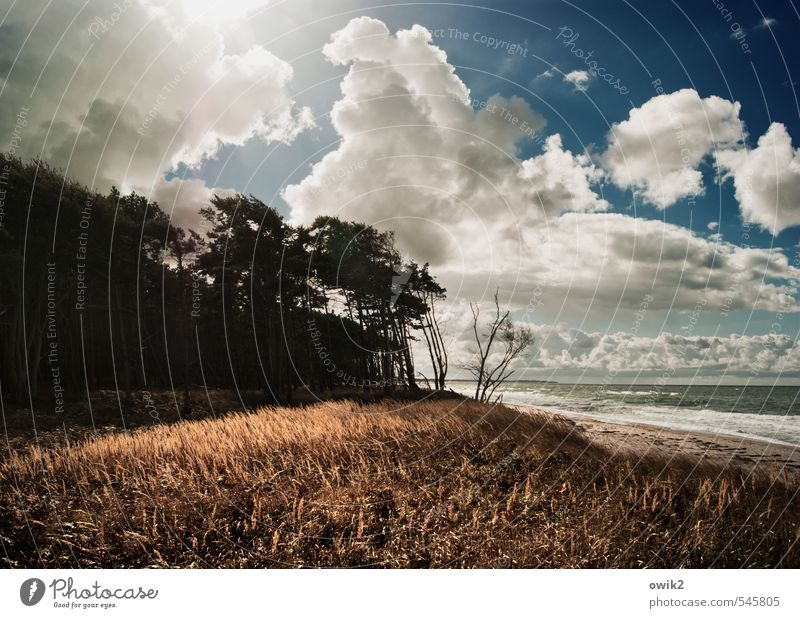 Dornland Ferne Freiheit Umwelt Natur Landschaft Pflanze Luft Himmel Wolken Gewitterwolken Horizont Klima Wetter Schönes Wetter Wind Sturm Baum Sträucher Küste