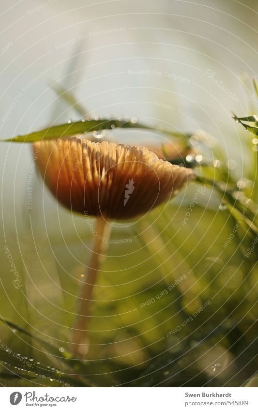 Morgenzauber Lebensmittel Pilz Ernährung Bioprodukte Vegetarische Ernährung Umwelt Natur Pflanze Wasser Wassertropfen Sonnenlicht Sommer Herbst Schönes Wetter