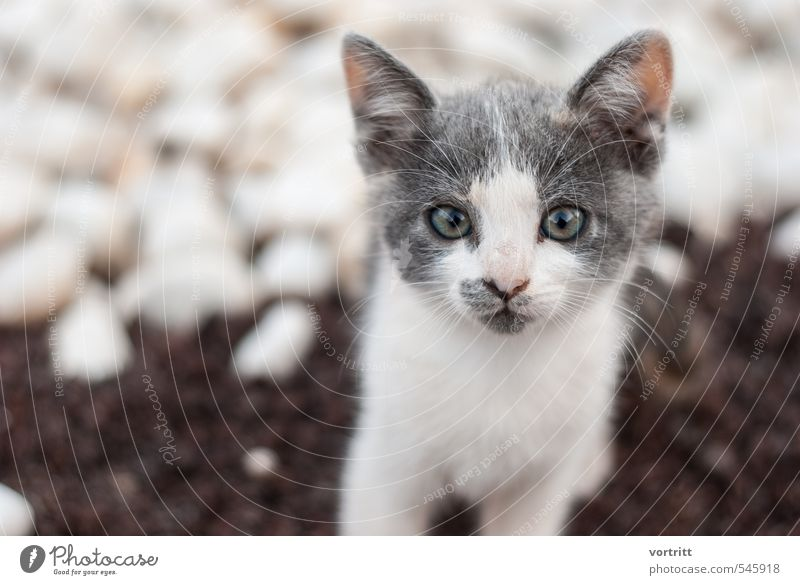 bus bus bus Katze Kind schön weiß Tier grau braun niedlich Haustier