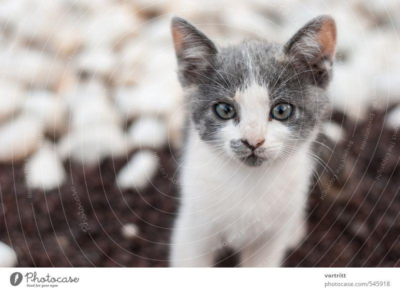 bus bus bus Tier Haustier Katze 1 braun grau weiß niedlich schön Kind Farbfoto Gedeckte Farben Außenaufnahme Textfreiraum rechts Unschärfe Tierporträt Blick