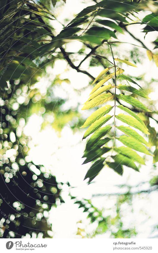 Sonnentanz grün Pflanze Sommer Baum Blatt Wald Wärme Park Schönes Wetter
