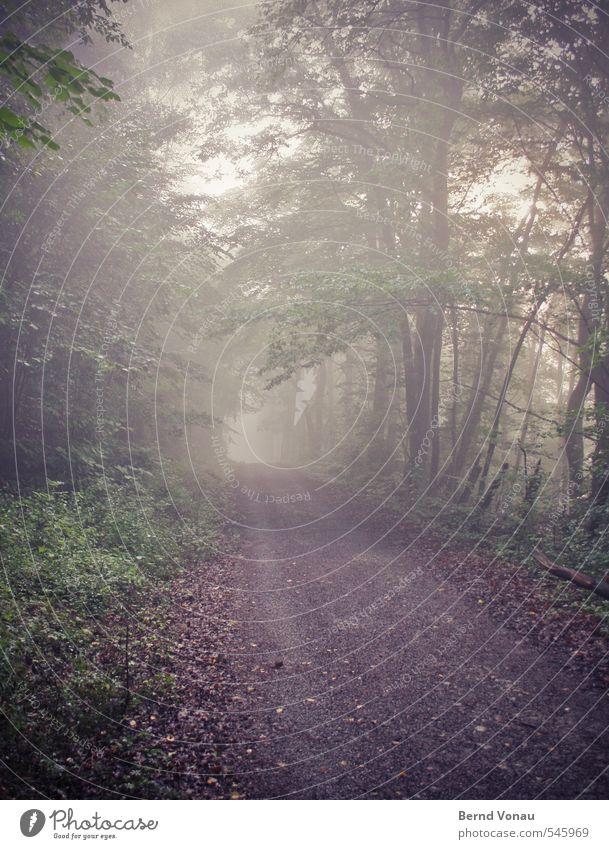 Immer weiter... Herbst Nebel Pflanze Baum Gras Sträucher Wald braun grau grün schwarz weiß Wege & Pfade Fußweg Baumstamm Ast Zweig Fahrbahn vorwärts Perspektive