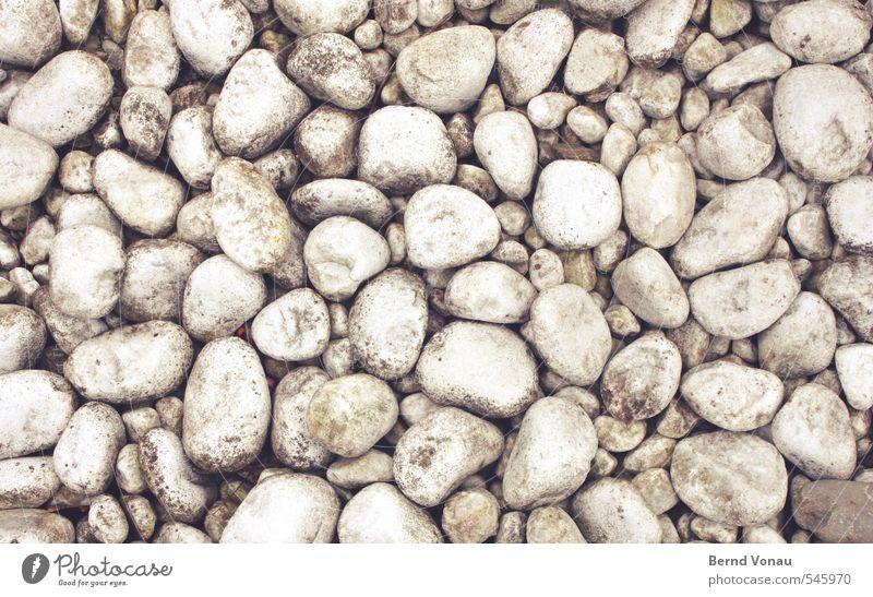 steinweiss Stein braun grau schwarz weiß rund hart Muster hell gepunktet liegen flach Farbfoto Außenaufnahme Menschenleer Tag Licht Starke Tiefenschärfe