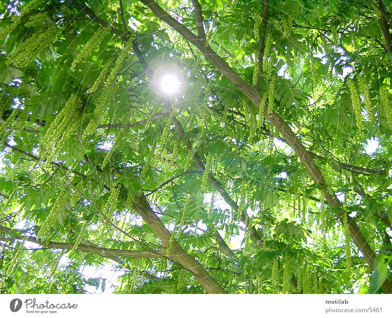 sonnenreflex Baum Sonne