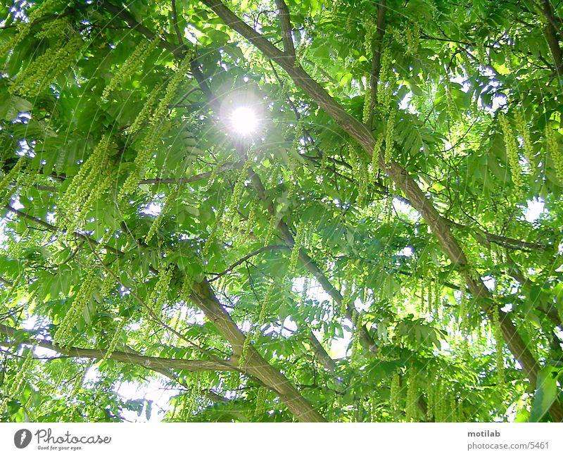 sonnenreflex Reflexion & Spiegelung Baum Sonne