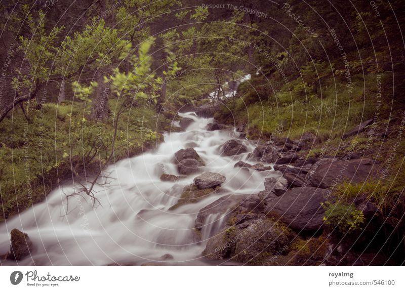 Das Wasser rauscht Umwelt Landschaft Baum Sträucher Moos Bach Fluss Wasserfall laufen fließen Rauschen Gischt Farbfoto Gedeckte Farben Außenaufnahme Tag