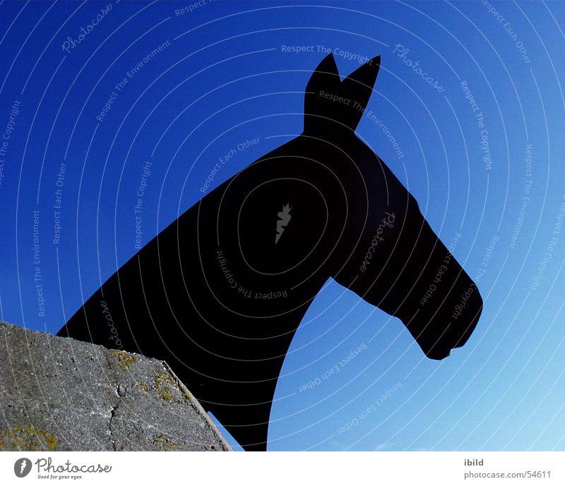 Pferdehimmel schwarz Himmel Silhouette blau Bunker