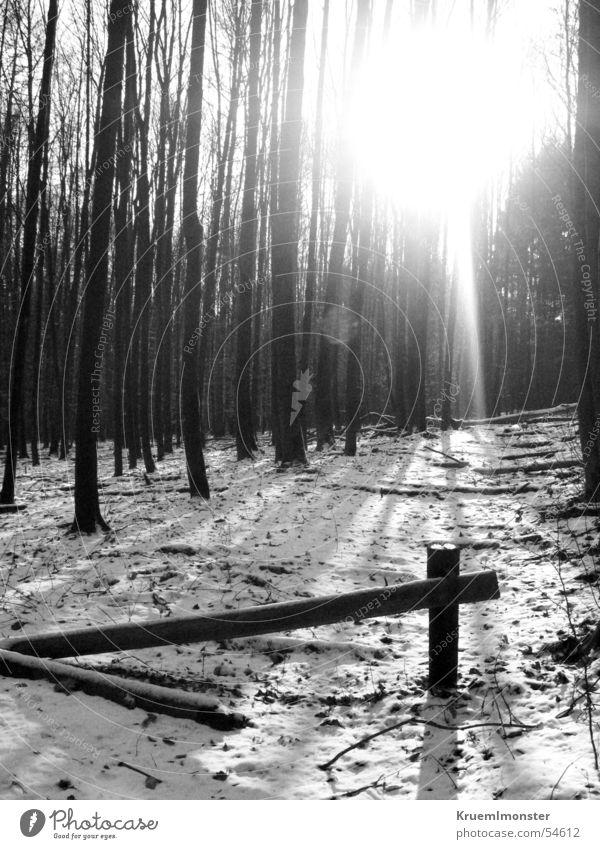 Schwarz Weiß Winter Wald Baum kalt Stadtwald Tor Sonne kalhe bäume
