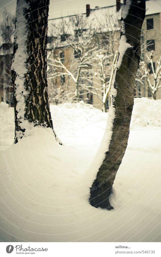 stadtwinter Winter Schnee Baum Baumstamm Chemnitz Haus Gebäude kalt Stadt Hinterhof zugeschneit Altbau Gedeckte Farben Außenaufnahme Menschenleer