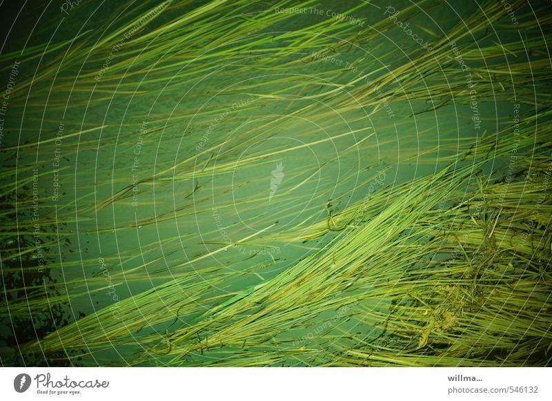 Seegras in einem Leipziger Kanal Natur Pflanze Fluss grün Strömung Gras Wasser Farbfoto Außenaufnahme Strukturen & Formen Menschenleer Vogelperspektive