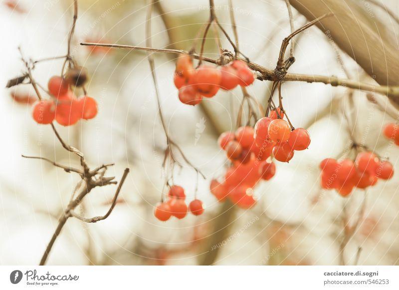 Zufriedenheit Natur Pflanze Herbst natürlich lustig Freiheit braun orange träumen Sträucher Lebensfreude einfach Vergänglichkeit einzigartig Warmherzigkeit