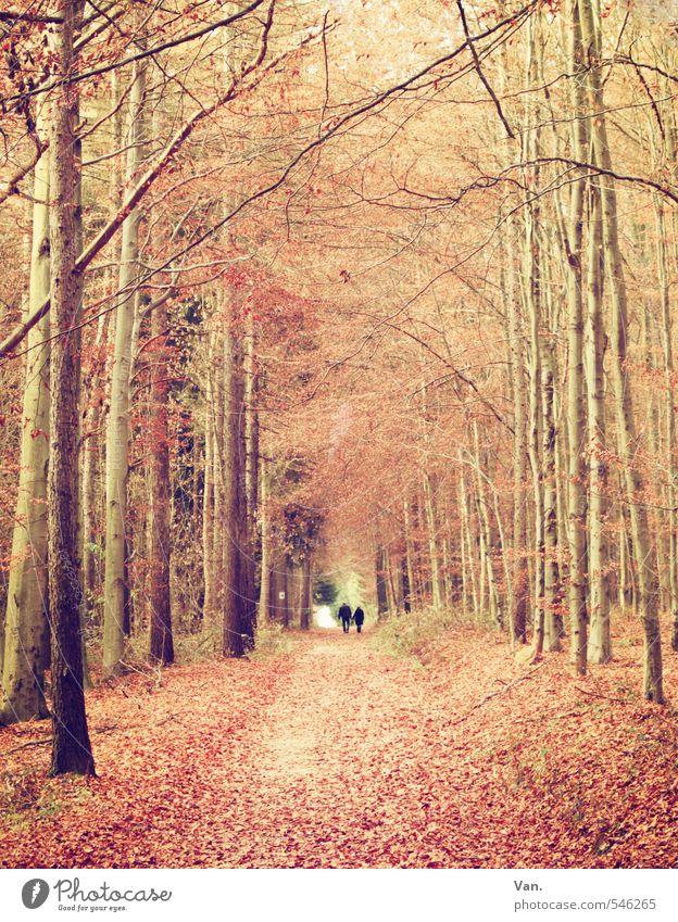 Herbst Mensch 2 Natur Pflanze Baum Blatt Wald Wege & Pfade Fußweg gelb rot Spaziergang Farbfoto Gedeckte Farben Außenaufnahme Tag
