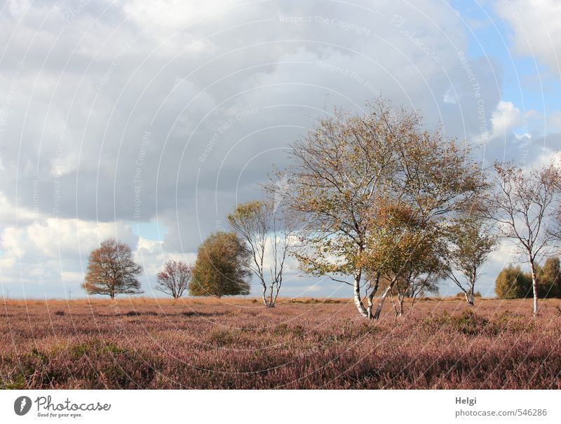 Herbst im Moor... Himmel Natur blau grün weiß Pflanze Baum Einsamkeit Landschaft Wolken Umwelt natürlich braun Stimmung Idylle