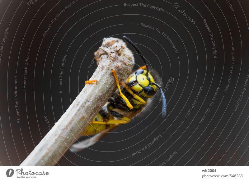 Gut festhalten! Natur Tier Herbst Garten ästhetisch hängen Wespen