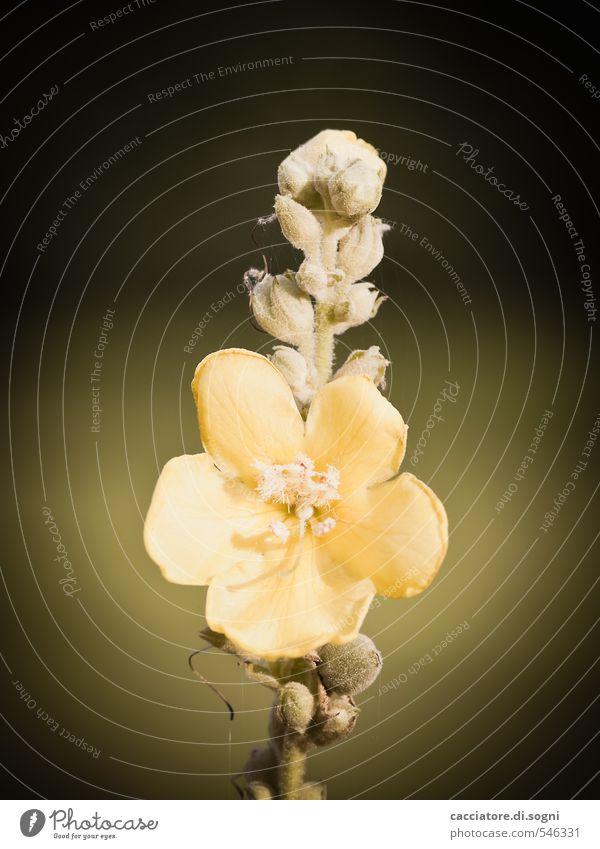 Abschied nehmen Natur grün Pflanze Einsamkeit schwarz gelb dunkel Traurigkeit Herbst Blüte Schönes Wetter ästhetisch einfach Vergänglichkeit Freundlichkeit