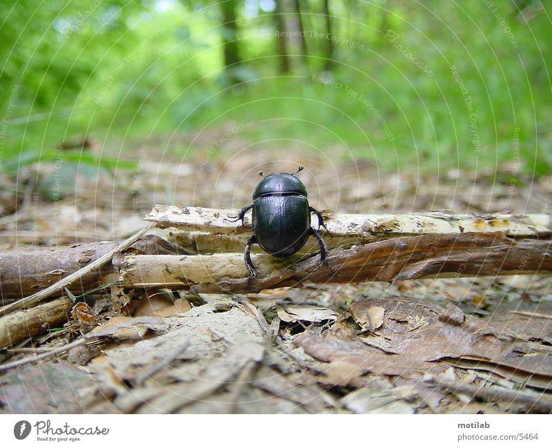 kaefer im wald Wald Käfer Schiffsbug