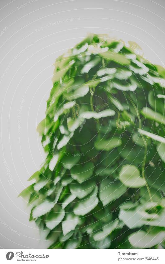 You name it! grün Pflanze Blatt dunkel Wand Mauer grau Zufriedenheit Wachstum ästhetisch Grünpflanze