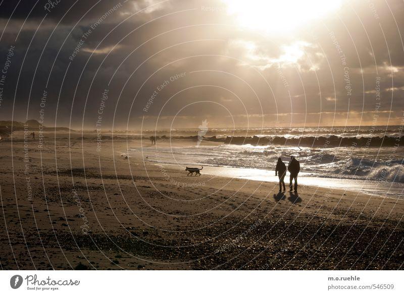 dog on beach Lifestyle Ferien & Urlaub & Reisen Tourismus Ausflug Ferne Freiheit Strand Meer Wellen Mensch Paar 2 18-30 Jahre Jugendliche Erwachsene Umwelt