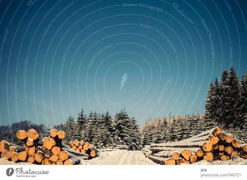 (fo)rest Winter Himmel Wolkenloser Himmel Schönes Wetter Schnee Baum Tanne Fichte Wald Fußweg blau Baumstamm Holzfäller Abholzung Oberbergischer Kreis Umwelt