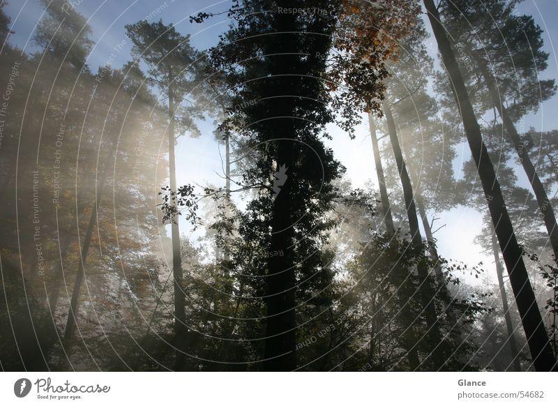 shine Baum Sonne Wald