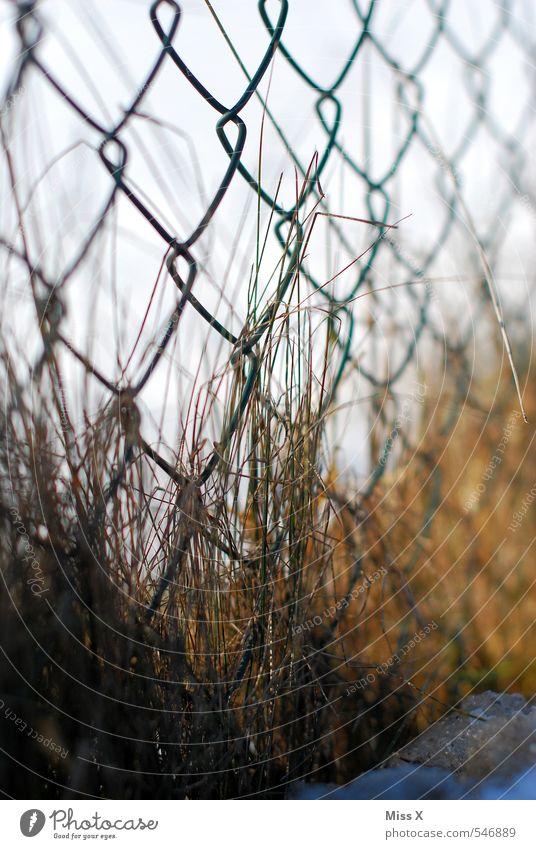 Am Zaun Winter Schnee Herbst Gras Garten braun trist Wachstum Rost verblüht bewachsen dehydrieren Metallzaun Maschendraht verwildert