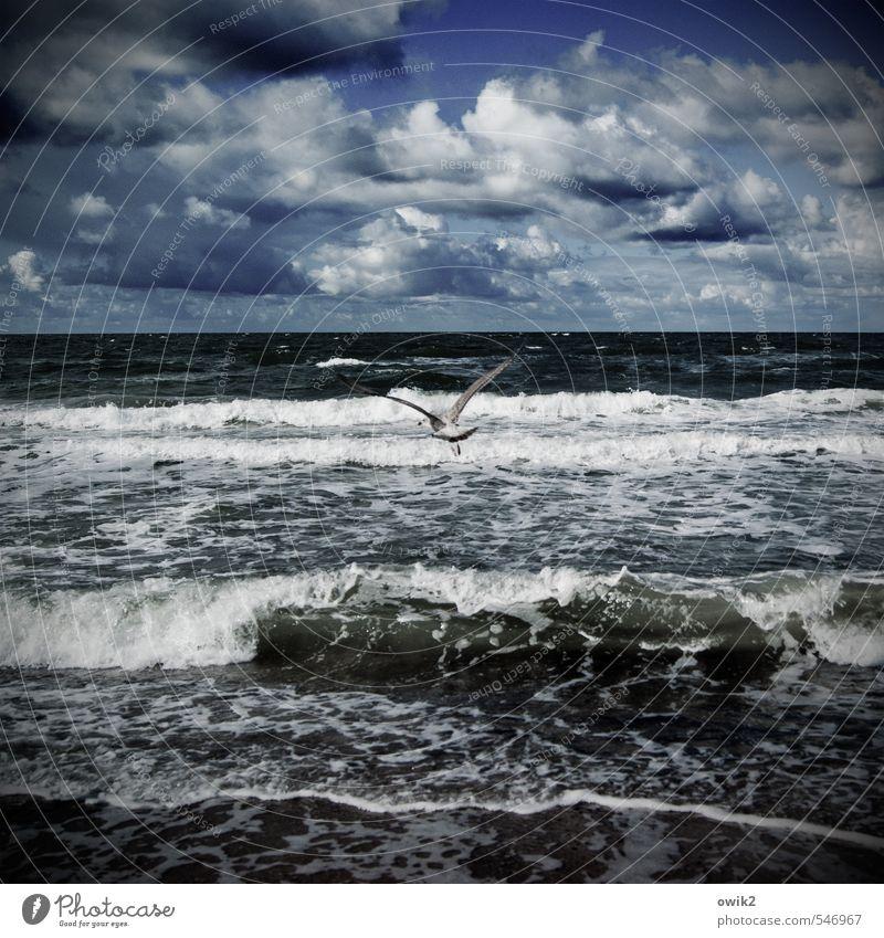 Ausflug Himmel Natur Landschaft Wolken Tier Ferne Umwelt Küste Freiheit fliegen Horizont Wetter Wellen Idylle Wind Flügel