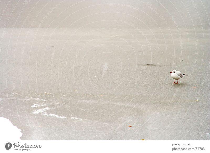 Einsamer Vogel kalt Schlamm gefroren Park Winter See Eisvögel Einsamkeit Trauer Außenaufnahme Schnee Fluss Single