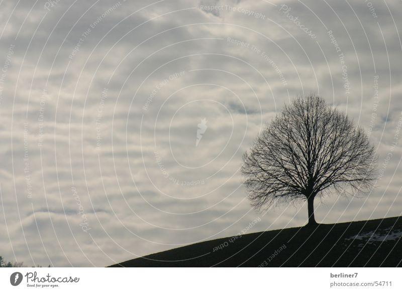 einsamer Baum am Hügel Wolken Berge u. Gebirge grau Horizont Ast