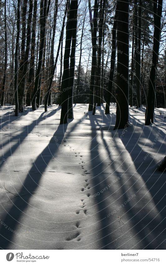 Winterspaziergang Baum Sonne Wald Schnee Ast Fichte