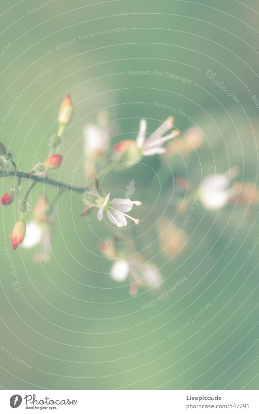Blüüte Natur grün weiß Pflanze Sommer rot Blatt gelb Blüte Garten orange Grünpflanze