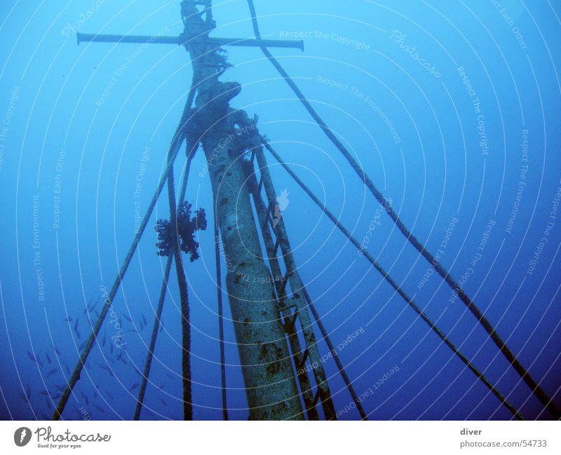 Mast tauchen Wasserfahrzeug Ägypten Unterwasseraufnahme Schiffswrack Rotes Meer blau Seil diving Sonnenuntergang