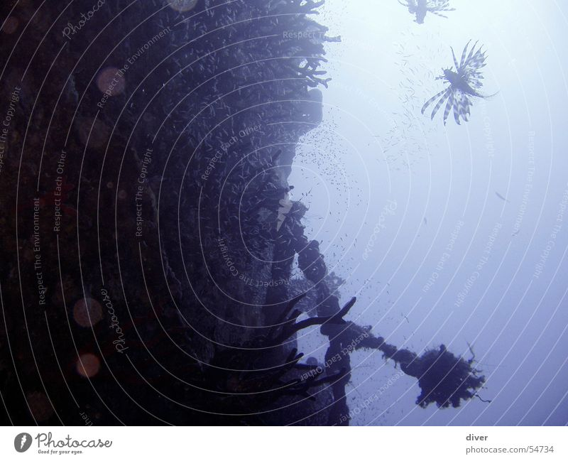 Bordwand blau Wasserfahrzeug Fisch tauchen Ägypten Schrott Schiffswrack Schiffsunglück Rotes Meer
