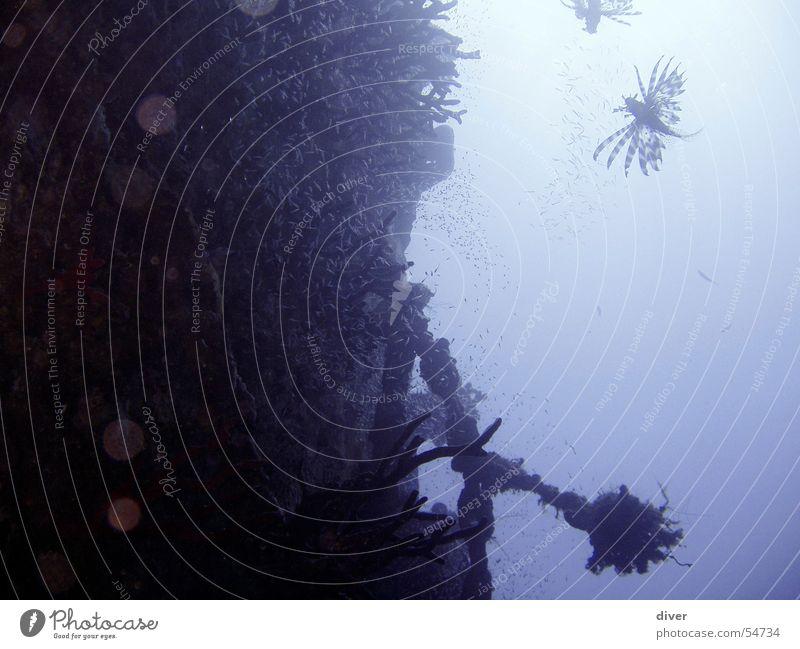 Bordwand tauchen Wasserfahrzeug Gegenlicht Schrott Ägypten diving Unterwasseraufnahme Schiffswrack Schiffsunglück Fisch blau Rotes Meer Sonnenuntergang