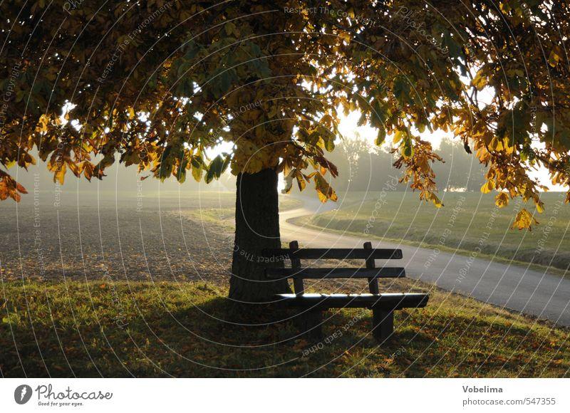 Bank im Herbst Natur Landschaft Schönes Wetter Baum Feld Wege & Pfade braun gelb gold grün Stimmung Hoffnung Glaube Traurigkeit Farbfoto Außenaufnahme Abend
