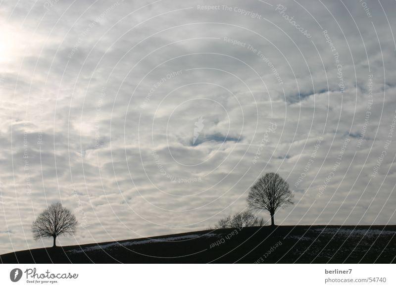 Zwei Bäume Baum 2 Hügel Berghang Wolken grau Horizont Berge u. Gebirge Himmel versteckte sonne