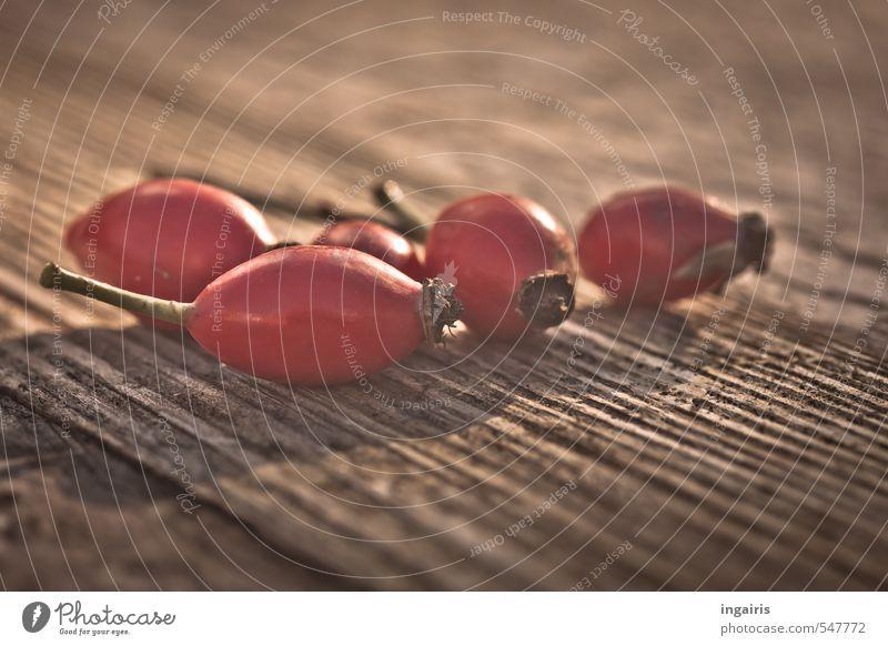 Herbstliches Stillleben Tee Hagebuttentee Gesundheit Gesunde Ernährung Pflanze Frucht Früchtetee Beeren Holz leuchten braun rot Zufriedenheit Erntedankfest