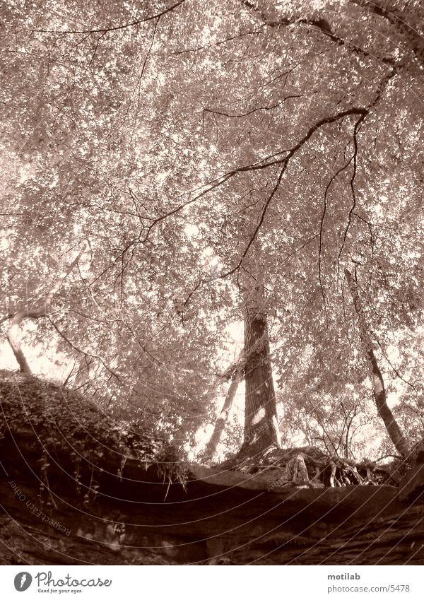vertraeumt Baum Sonne Blatt Idylle