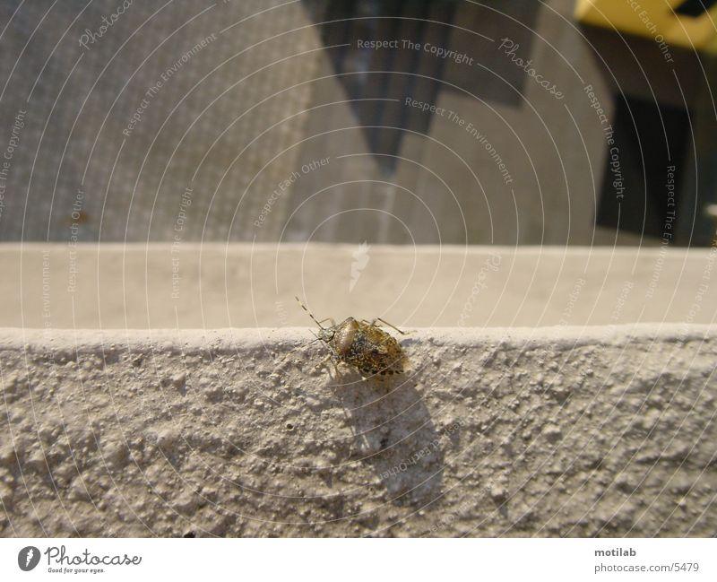 bug on suicide? Schiffsbug Käfer bugs
