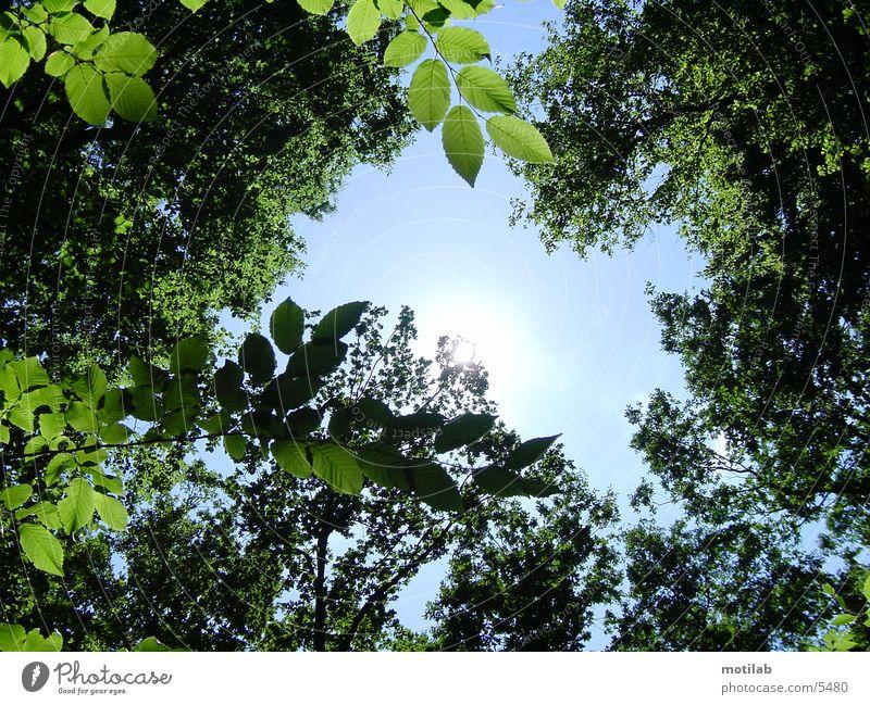 sonnenreflex °2 Himmel Baum Sonne Sommer