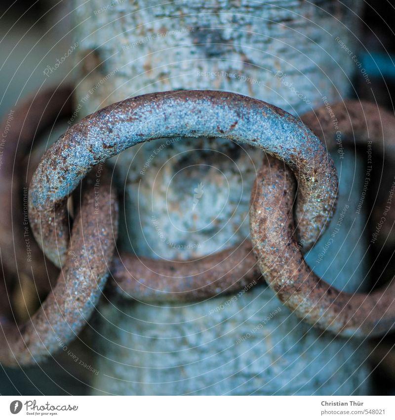 Angekettet Natur Sommer Holz braun Metall Kraft Romantik Sicherheit Zusammenhalt Team Vertrauen Mut Rost Verliebtheit Geborgenheit Kette
