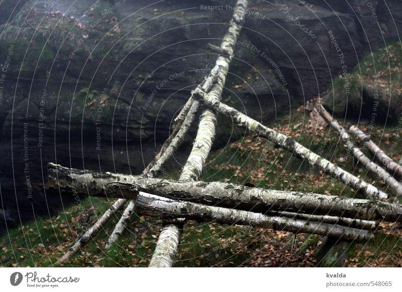 Mikado Umwelt Natur Herbst Baum wandern düster Wald Baumstamm Felsen Blatt Herbstlaub herbstlich Herbstwald Herbstwetter Birke Barriere Spaziergang Moos