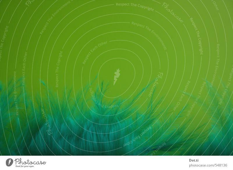 finde den Vogel weich grün Vogelfeder Feder Farbe Hintergrund getarnt Tarnung Detailaufnahme Farbfoto Studioaufnahme Strukturen & Formen Menschenleer