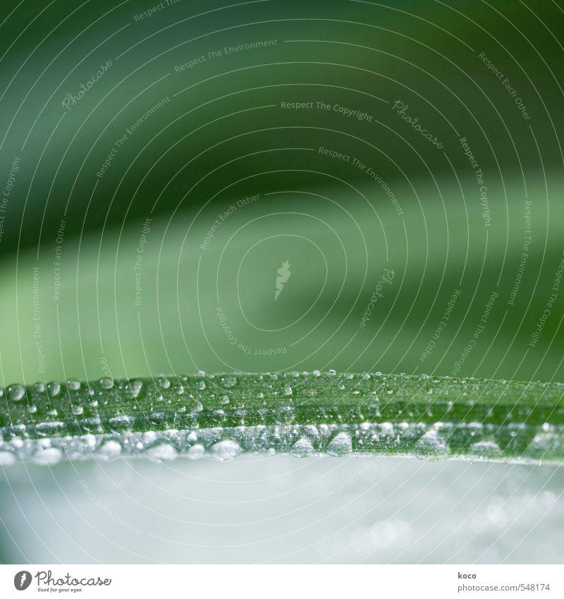 sometimes in summer. Stil schön Wellness Leben harmonisch Natur Pflanze Wasser Wassertropfen Frühling Sommer Gras Linie Tropfen berühren leuchten Wachstum